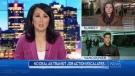 Newscast Nov. 14
