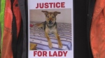 Not guilty verdict in death of St. Thomas dog