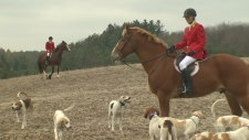 No animals hurt in evolved 'fox hunt'
