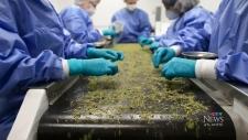Full steam ahead on cannabis NB privatization
