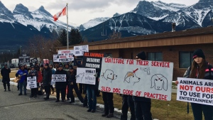 Protesters appeared outside two Canmore-area sled dog businesses on Nov. 16, 2019, claiming the animals there were being mistreated. (Supplied)