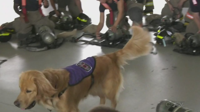 National Service Dog Ajax is with the Mississauga Fire Department.