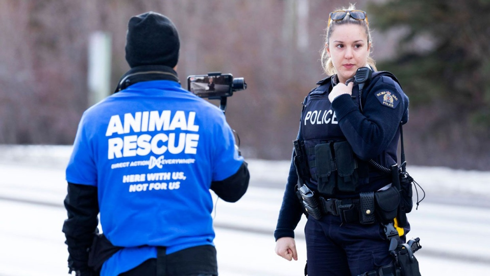 calgary, alberta, liberation lockdown, animal acti