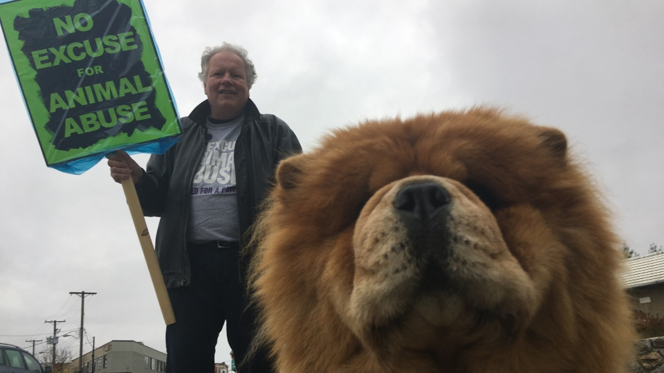 An animal rights activist outside the Duncan courtroom for the sentencing of Anderson Joe on Monday, Nov. 18, 2019. (CTV Vancouver Island)