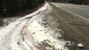 Child killed when moose strikes car