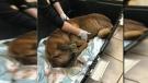 Duncan man sentenced in shocking animal abuse case
