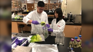 Lab technicians test leafy green samples. (Source: Michelle Gerwing/ CTV News Winnipeg)