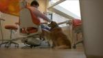 Sawatsky Sign-Off- Dentist Dog
