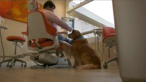 Sawatsky Sign-Off- Dentist Dog