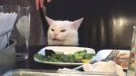 Salad-hating cat from Ontario goes viral