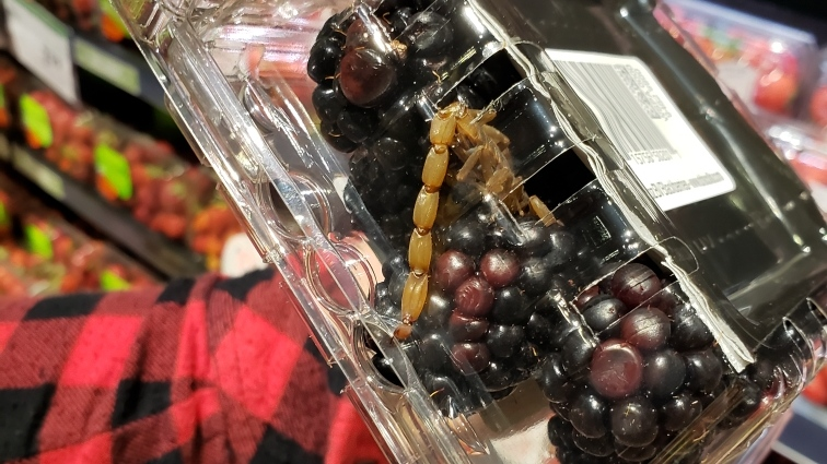 WATCH: Woman finds scorpion inside blackberries at Saskatoon Sobeys