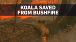 Woman reunited with koala she saved from fire