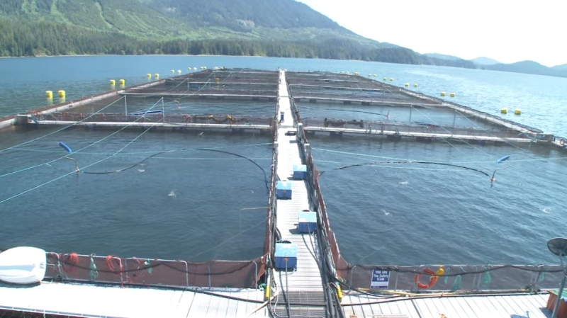 A Cermaq Canada fish farm is pictured. (Cermaq)