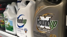 In this Feb. 24, 2019, file photo, containers of Roundup are displayed on a store shelf in San Francisco.(AP Photo/Haven Daley, File)