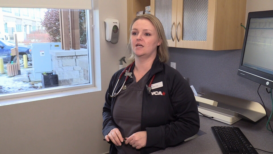 Dr. Caitlin Crain of 404 Veterinary hospital