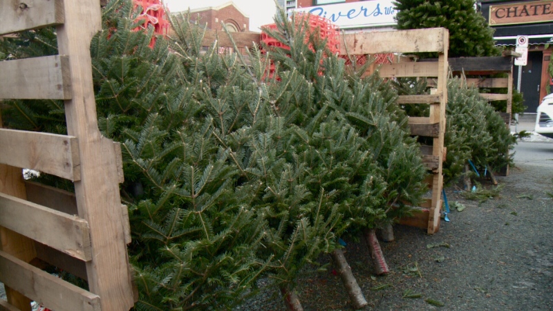 Prices higher for Christmas treees