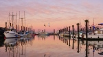 Frosty and cold morning at Fisherman's Wharf in Steveston. (Lanya photo)