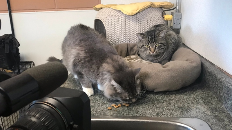 Adonis (L) and Romeo (R) share an unusual bond of friendship that's kept them together even through being picked up by animal protection. (Cally Stephanow/CTV News Regina)