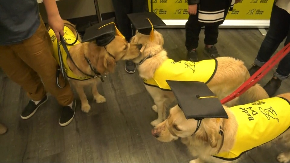 Guide dog graduation