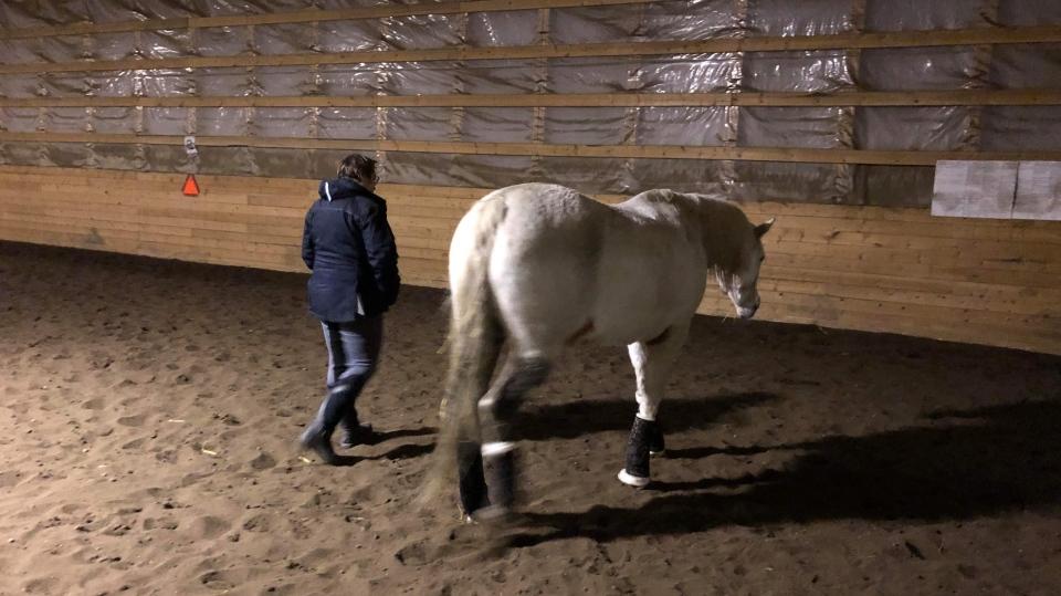 Lexi, horse