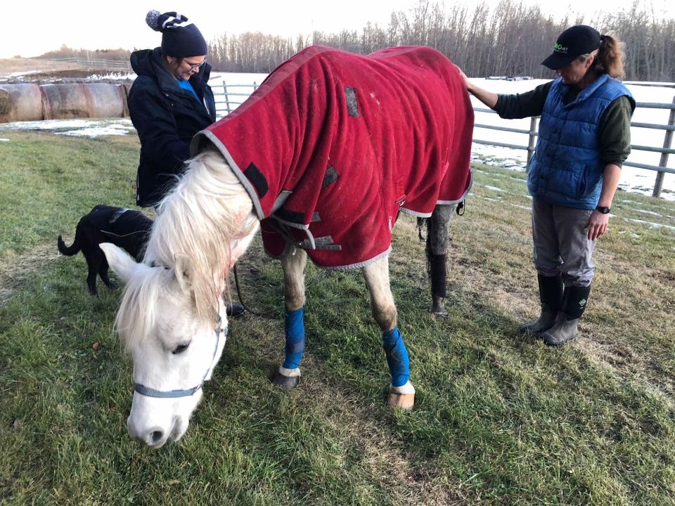 Lexi, horse, rescue, ice