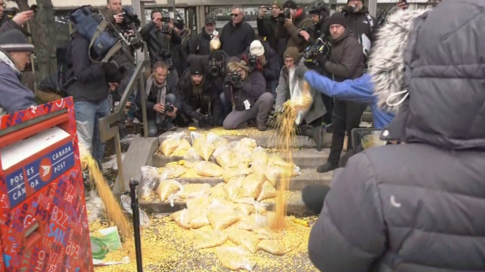 Protesting farmers dump corn in front of Trudeau's riding offices in Montreal.