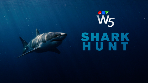 W5: Shark Hunt
