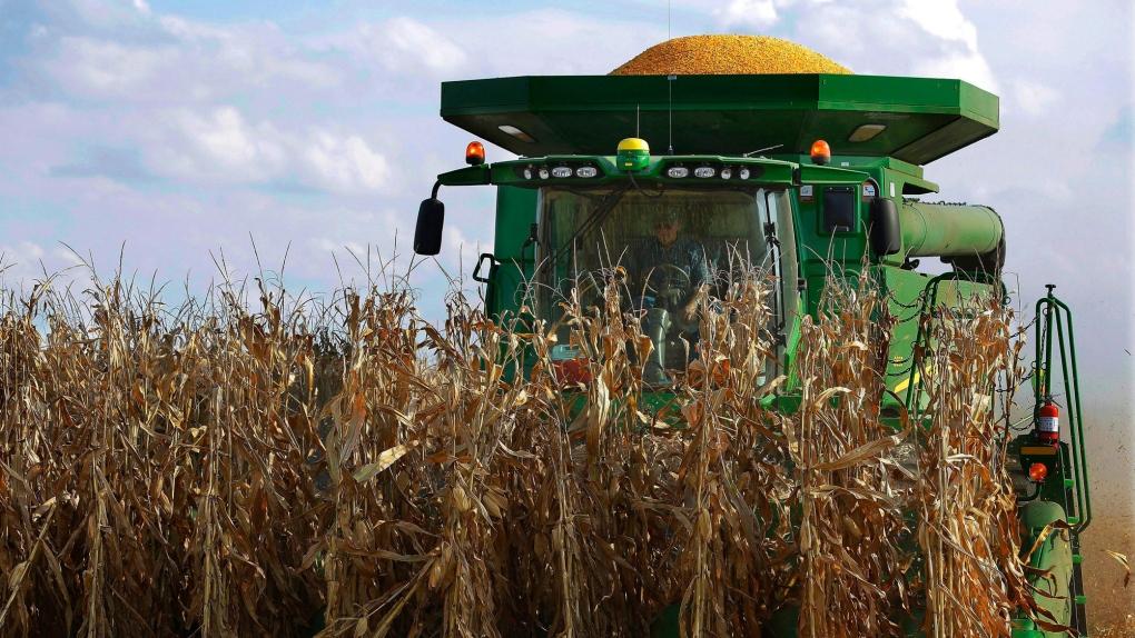 Grain farmer
