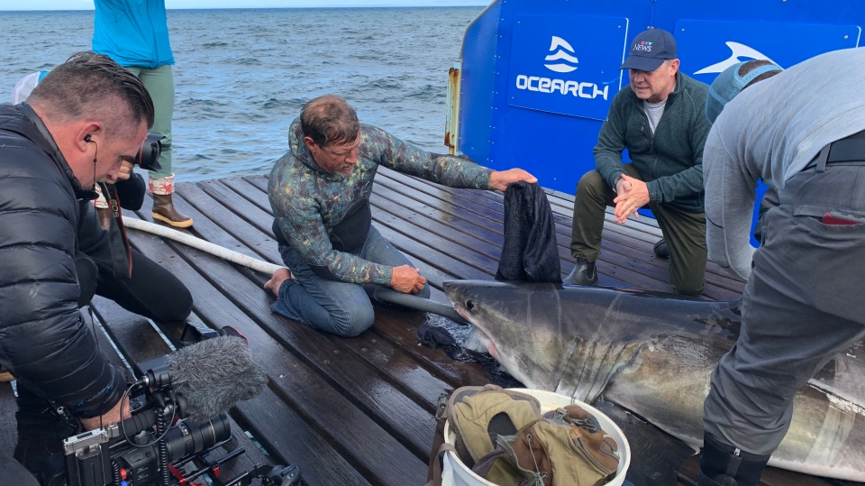 Brett McBride (second from left) is the only great white shark wrangler in the world. CTV's Todd Battis (kneeling) explores McBride's method to bring these sharks safely into the hands of researchers (Photo: Denise Kimmel / W5)