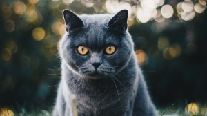 A grey cat with yellow eyes is seen in this file photo. (Kirsten Bühne/Pexels)