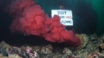 "Tavish Campbell holds up a large sign reading: ""2019 Fish Farm Virus Still Flowing"" near a pipe spewing bloodwater into the pacific ocean."