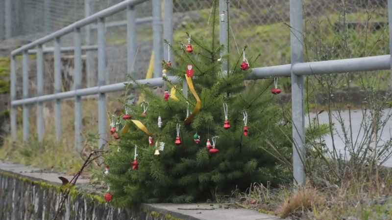 """It brings a smile to your face this time of year!"" Adam finds out how a tiny, decorated tree growing on a rock wall is inspiring the people who pass it."