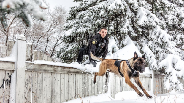 Police Service Dog Banner and his handler. (Source: Twitter/Winnipeg Police Service)