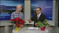Master gardener James St. John and CTV Northern Ontario's Tony Ryma discuss caring for holiday plants. December 5, 2019.