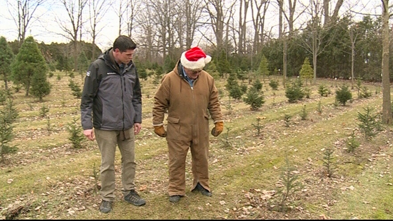 What is impact of Christmas tree shortage?