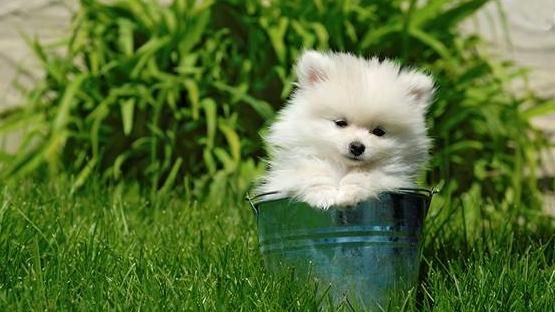 Yogi as a puppy