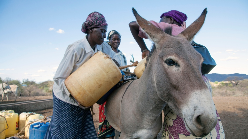 Donkeys are crucial to survival in many parts of the world. (Photo courtesy of The Donkey Sanctuary.)