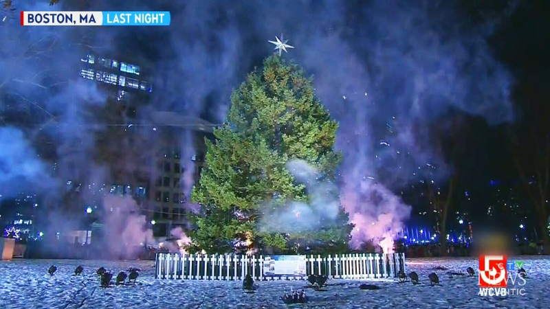 Nova Scotia tree lights up Boston sky