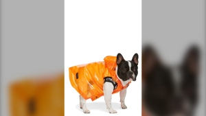 Montreal-based fashion platform SSENSE has launched a line of dogwear. (Photo: CNW Group/SSENSE)