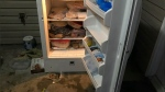 Bear raids island baker's fridge, devours desserts