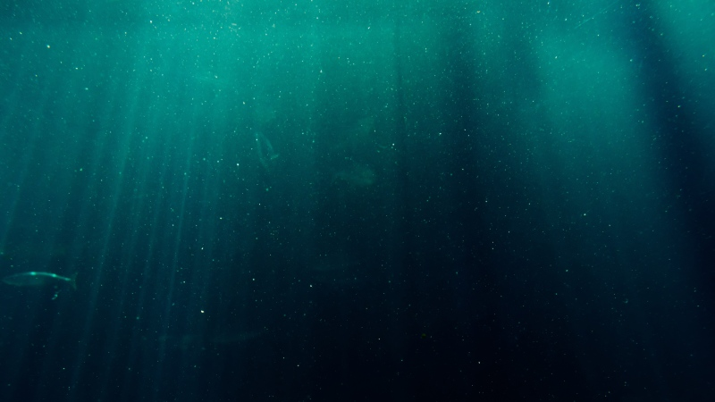 An ocean can be seen in this undated image. (Blaque X from Pexels)