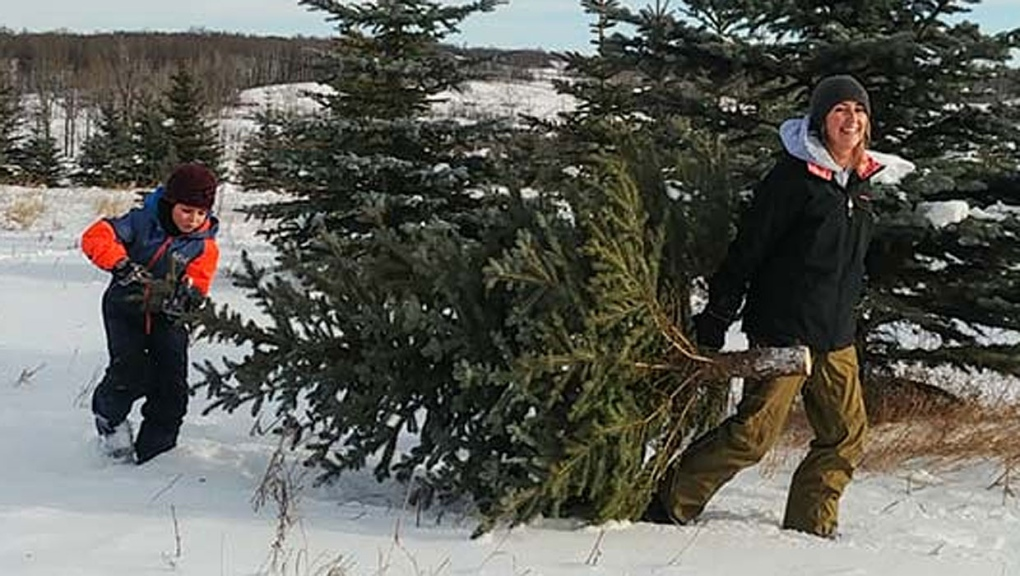 Non-native tree removal and a Christmas tree shortage tackled by conservation group