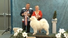 Pooches compete at Christmas dog show