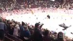 Raining bears: Giants host annual teddy toss