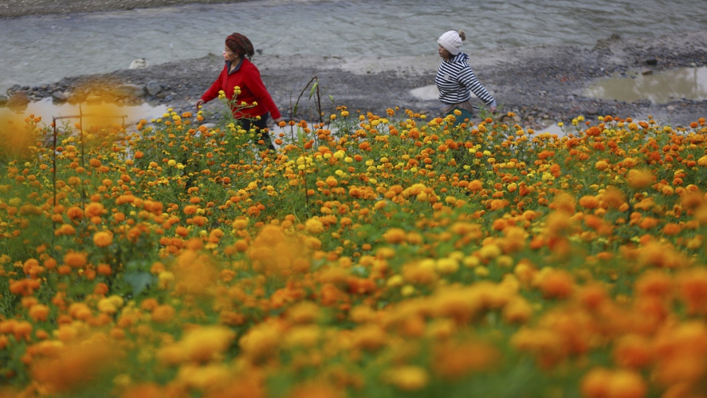 Nepalese women walk past a field of marigolds