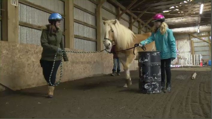equine-assisted learning