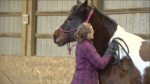 Kristy Falconer and her family have experienced the healing power of horses first-hand and part of the reason to start the equine-assisted learning program was to share that with others.