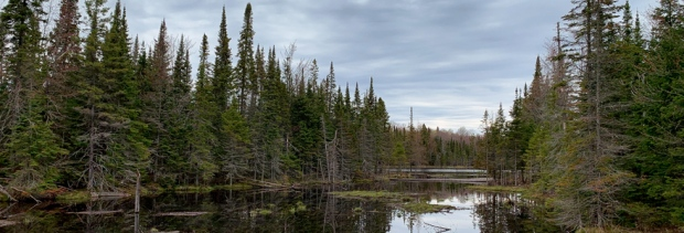 Beaver Pond in Northern Ontario