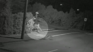 Surveillance video taken from a home in Chilliwack, B.C. appears to show a woman trying to steal a Christmas tree on Dec. 10, 2019.