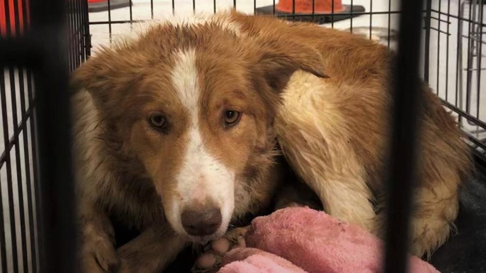 Nova Scotia Spca Takes Legal Custody Of Dogs Seized In Cruelty